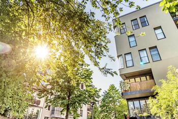 Immeuble arbre soleil